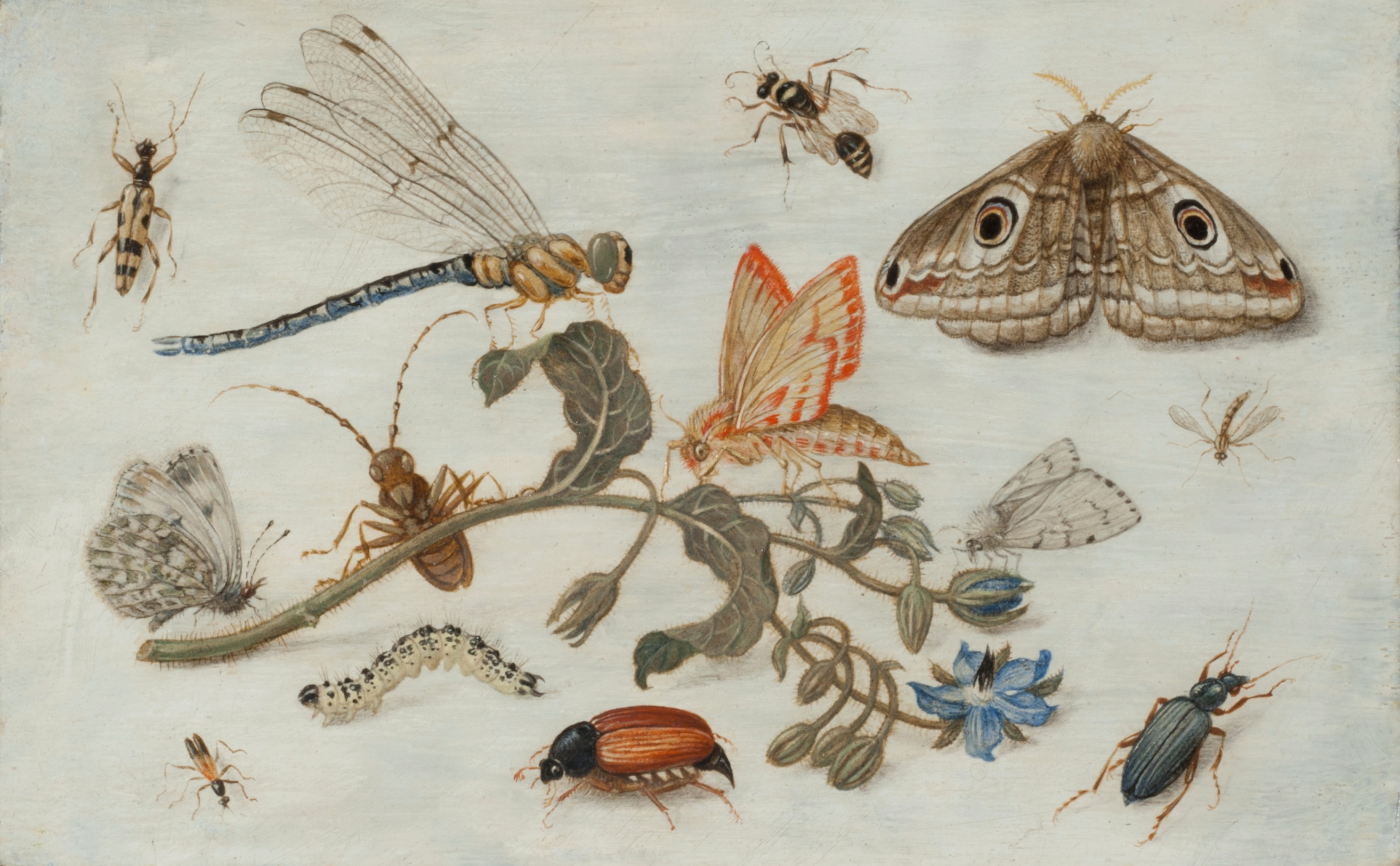 Jan van Kessel the Elder - Study of Insect with a Flower of Borago Officinalis