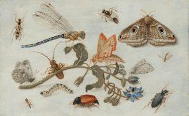 <p></p>Jan van Kessel il Vecchio